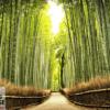 Tranh dán tường con đường trong rừng trúc 1008
