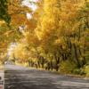 Tranh phong cảnh con đường đẹp 13048