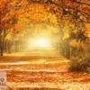 Tranh con đường cây vàng đỏ 33