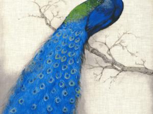 Tranh chim công đẹp 78