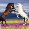Tranh đôi ngựa 239