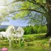 Tranh đôi ngựa bạch 11676
