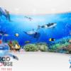 Tranh 3D cá heo đẹp 40