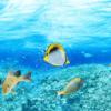 Tranh đại dương 3D 136