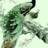 Tranh đôi chim công 3631