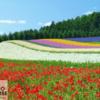 Tranh phong cảnh hoa 10889