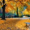 Tranh phong cảnh mùa thu 362
