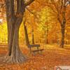 Tranh phong cảnh mùa thu lãng mạn 215