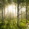 Tranh phong cảnh rừng cây 228