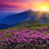 Tranh phong cảnh tự nhiên đẹp 2